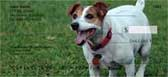 Jack Russell Terrier Checks