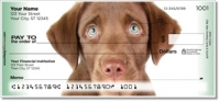 Chocolate Lab Pup Personal Checks